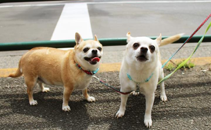 dogs496