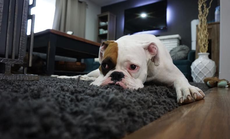 dog24