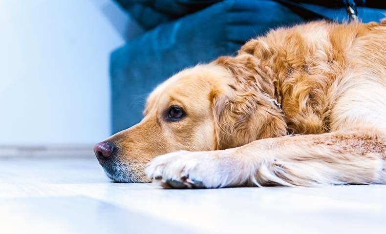 dog28